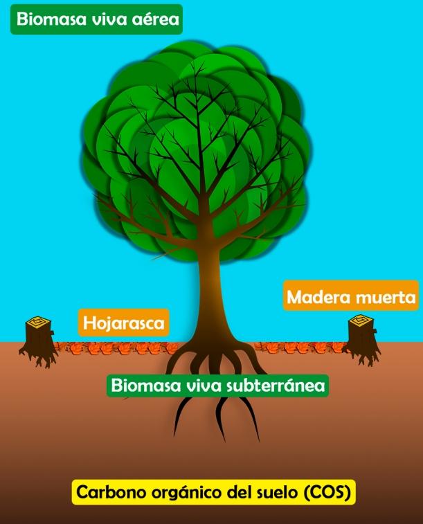 Almacenes_árboles